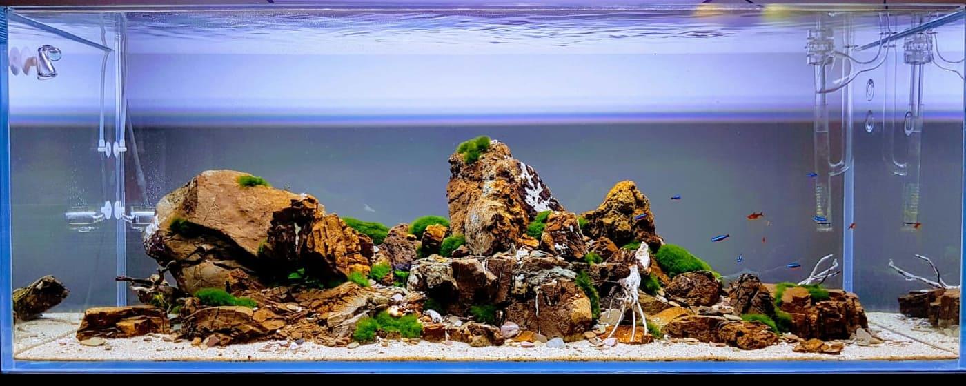 Nově založené akvárium zákazníka z Ostravy