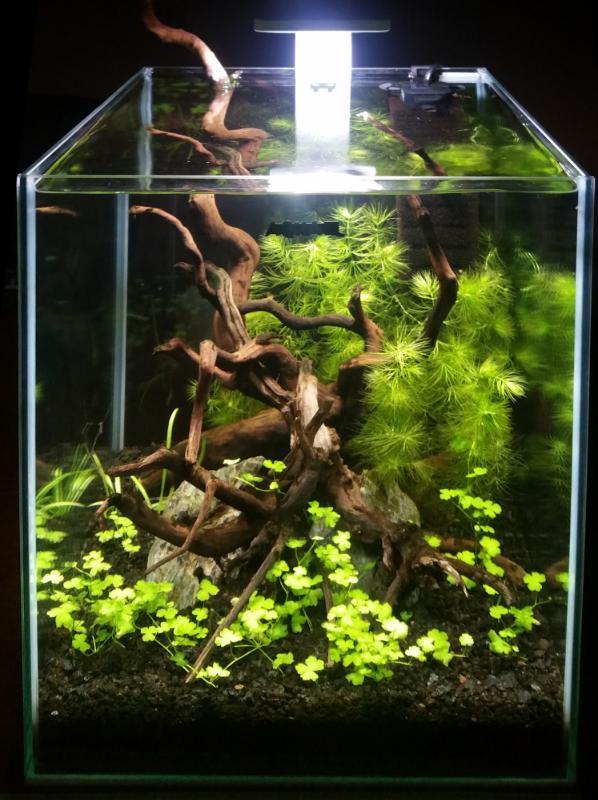 Obecné rady pro funkční miniakvárium