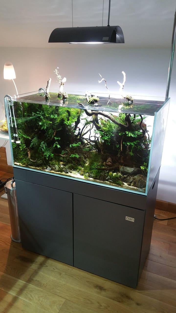Fosfor - makroprvek v akváriu